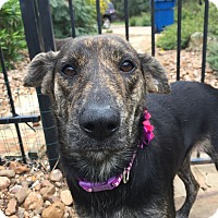Adopt A Pet :: Selma - New York, NY