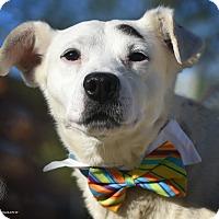 Adopt A Pet :: Walter - St. Louis, MO