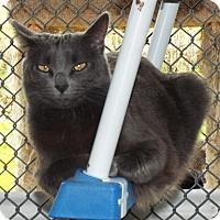 Adopt A Pet :: Makayla - Grants Pass, OR