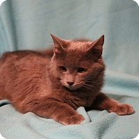 Adopt A Pet :: Sterling - Spring Valley, NY