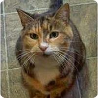 Adopt A Pet :: Annabella - Portland, ME