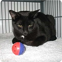 Adopt A Pet :: Pippa - Shelton, WA