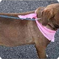 Adopt A Pet :: Sylvia - Cumming, GA