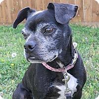 Adopt A Pet :: Minnie - Weatherford, TX