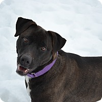 Adopt A Pet :: Wren - Lake Odessa, MI