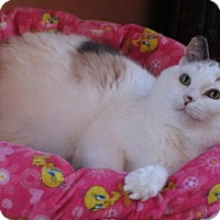 Calico Cat for adoption in St. Paul, Minnesota - Matilda and Momo