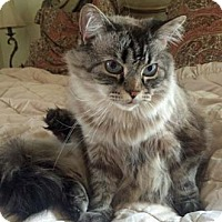 Adopt A Pet :: Himmie - Merrifield, VA