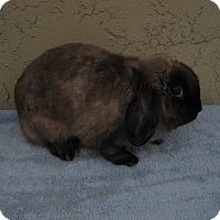 Adopt A Pet :: Lola - Bonita, CA
