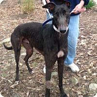 Adopt A Pet :: Jax Drover - Gerrardstown, WV