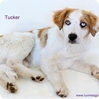 Adopt A Pet :: Tucker - Bloomington, MN