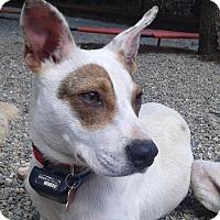 Adopt A Pet :: Bonnie - Oakley, CA