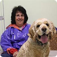 Adopt A Pet :: Bailey - Elyria, OH