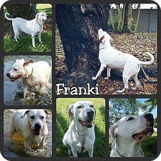 Pointer Mix Dog for adoption in Miami, Florida - Franki