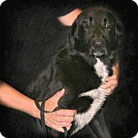Adopt A Pet :: Sox - Lufkin, TX
