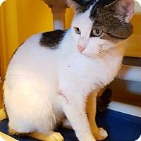Adopt A Pet :: Tanager - Salisbury, MA