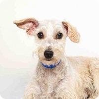 Adopt A Pet :: FLOWER - Murray, UT