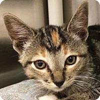Adopt A Pet :: Holly - Prescott, AZ