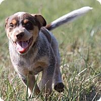 Adopt A Pet :: Squiggy - Broken Arrow, OK