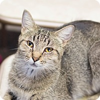 Adopt A Pet :: Genesis - Fountain Hills, AZ