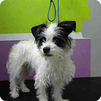 Adopt A Pet :: PAGE - Houston, TX