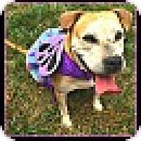 Adopt A Pet :: Elsa - Arlington, VA