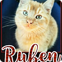 Adopt A Pet :: Ruben - Edwards AFB, CA