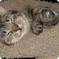 Adopt A Pet :: Harper - Roseville, MN