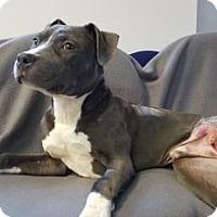 Adopt A Pet :: Arrow - Elyria, OH