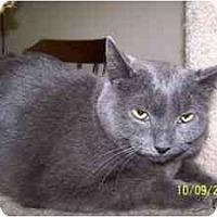 Adopt A Pet :: Sonny - Milwaukee, WI