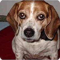 Adopt A Pet :: Maggie - Ohio - Indianapolis, IN