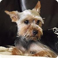 Adopt A Pet :: JoJo - Palm City, FL