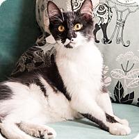 Adopt A Pet :: Clapton - Chicago, IL