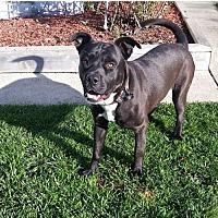 Adopt A Pet :: Dale - Crestline, CA