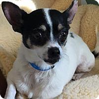 Adopt A Pet :: Dakota - Costa Mesa, CA