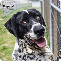 Adopt A Pet :: Spot - Lincolnton, NC