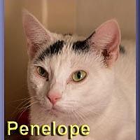 Adopt A Pet :: Penelope - Aldie, VA
