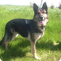 Adopt A Pet :: Rio - Pleasant Grove, CA