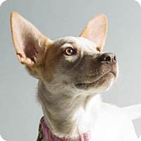 Adopt A Pet :: Ren - Sunnyvale, CA