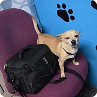 Adopt A Pet :: Peanut - Meridian, ID
