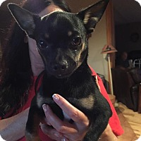Adopt A Pet :: Trucker - Ashville, OH