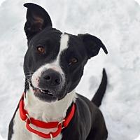 Adopt A Pet :: Julie - Buena Vista, CO