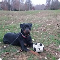 Adopt A Pet :: Louie - Richmond, VA