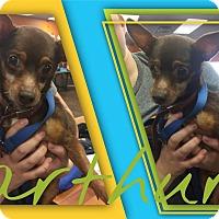 Adopt A Pet :: Arthur - Colmar, PA