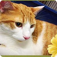 Adopt A Pet :: Cashew - Mansfield, TX