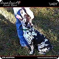 Adopt A Pet :: Lady - Sarasota, FL