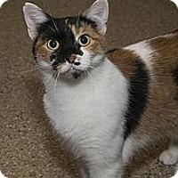 Adopt A Pet :: Jane Dekalb - Lombard, IL