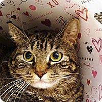 Adopt A Pet :: Felcia - Albany, NY