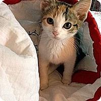 Adopt A Pet :: Maria - Xenia, OH