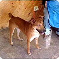 Adopt A Pet :: Gordini - Scottsdale, AZ