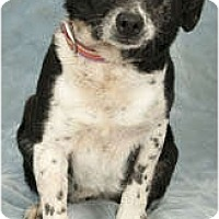 Adopt A Pet :: Susie-Q - Chicago, IL